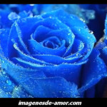 Rosa de color azul