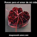 Rosas para el amor de mi vida, imagen romantica para dedicar