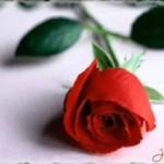 Una imagen de una rosa para regalar
