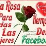 Una rosa hermosa para las chicas hermosas del Facebook