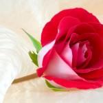 Imagenes de rosas para regalar en facebook