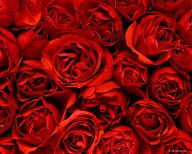 rosas para regalar en facebook4