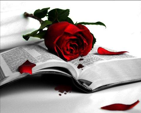 amor-poeta