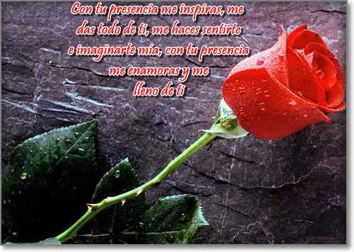 imagenes de rosas con frases de amor 2