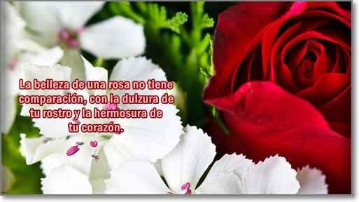 imagenes de rosas con frases de amor 3