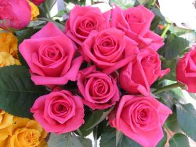 rosas para enamorar una persona