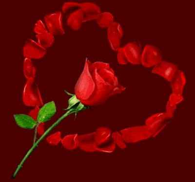 rosas para enamorar